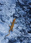 Small yellow lizard on a blue rock — Stock Photo