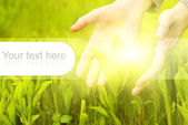 Human hands touching green grass. Graphic design elements on it — Stock Photo