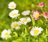 Ladybug sitting on flower — Stock Photo