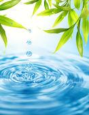 Folling las gotas de agua de una hoja de bambú — Foto de Stock