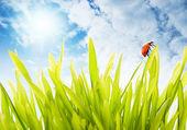 čerstvé zelené trávě nad zamračená obloha — Stock fotografie