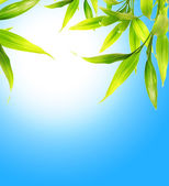 Bamboo leaves over blue sky — Stock Photo