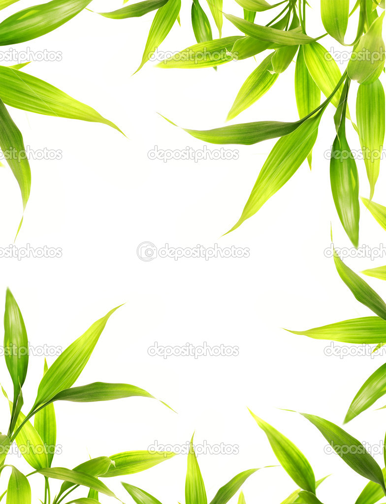 Beautiful bamboo leaves border over white background — Stock Photo #4804479