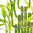 Bamboo leaves isolated on white background — Stock Photo
