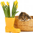 Rabbit and vase with fresh tulips on white background — Stock Photo