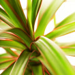 Beautiful oriental plant close-up macro shot — Stock Photo #4839764