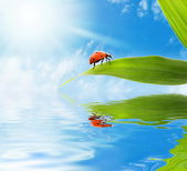 Ladybug sitting on a green leaf reflected in rendered water — Stock Photo