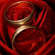 Wet rose with two golden wedding rings on it — Stockfoto