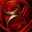 Wet rose with two golden wedding rings on it — Foto de Stock