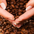 Handful of premium coffee beans - Photo