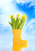Spring is coming! — Stockfoto
