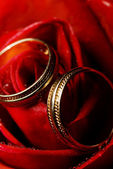 Wet rose with two golden wedding rings on it (shallow DoF) — Stockfoto