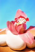 Pink orchid on white stones — Stock Photo