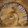 Beautiful seashell - Stock Photo