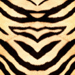 Tiger style fabric texture — Stock Photo