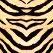Tiger style fabric texture - Stock Photo