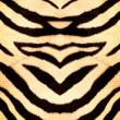 Tigre estilo textura de la tela — Foto de Stock