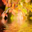 Autumn leaves in rendered water — Stock Photo