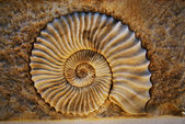 Beautiful seashell — Stock Photo