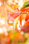 Autumn leaves on abstract blurred background (very shallow DoF, — Stock Photo