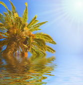 Palm tree reflected in rendered water — Stock Photo