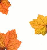 Marco las hojas de otoño — Foto de Stock