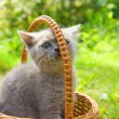 Small funny kitten sitting in a basket — Stock Photo
