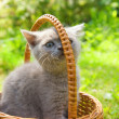 Small funny kitten sitting in a basket — Стоковая фотография