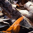 Fire in a dry forest - Stock Photo