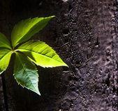 Sprout on dark wooden texture — Stock Photo