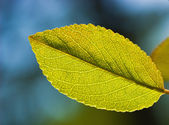 Green leaf on abstract blurred background — Stock Photo