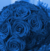 Bunch of red roses (toned in blue) — Stock Photo