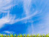 Green grass over blue sky (lots of copy space) — Stock Photo