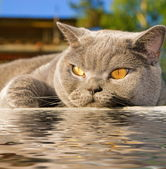 Cat lying near the water — Stock Photo
