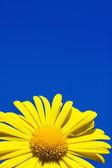 Gelbe blume over blue sky — Stockfoto