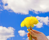 Hand with dandelions over blue cloudy sky — Stock Photo