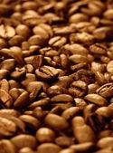 Coffee beans (shallow DOF) — Stock Photo