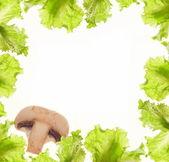 Salad and mushroom border — Stock Photo