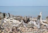 Whitefish bay. — Stock Photo