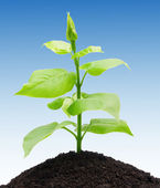 Plant and soil — Stock Photo