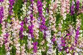 Delfinium flowers — Stock Photo