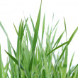 Stock Photo: Green grass.
