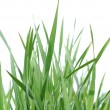 Green grass. - Stock Photo