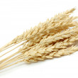 Wheat. — Stock Photo
