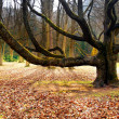 Old tree in park — Stock Photo #2873363