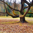 Old tree in the park — Stock Photo #2873450