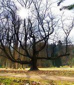 массовые дерево & саншайн — Стоковое фото