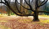 Old tree in the park — Stock Photo