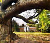 Turcianska Stiavnicka - Massive tree — Stock Photo