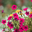 Red flowers (petunia) — Stock Photo #2878382